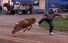 Goat goes on rampage in Brazilian town
