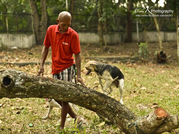 Hero dog Kabang gets new nose