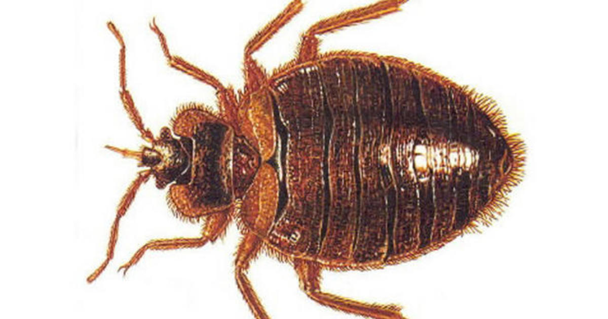 Stop Bed Bugs From Spreading