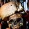 BLS_skulls.jpg