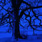 ThatTree_Day323_February09.jpg