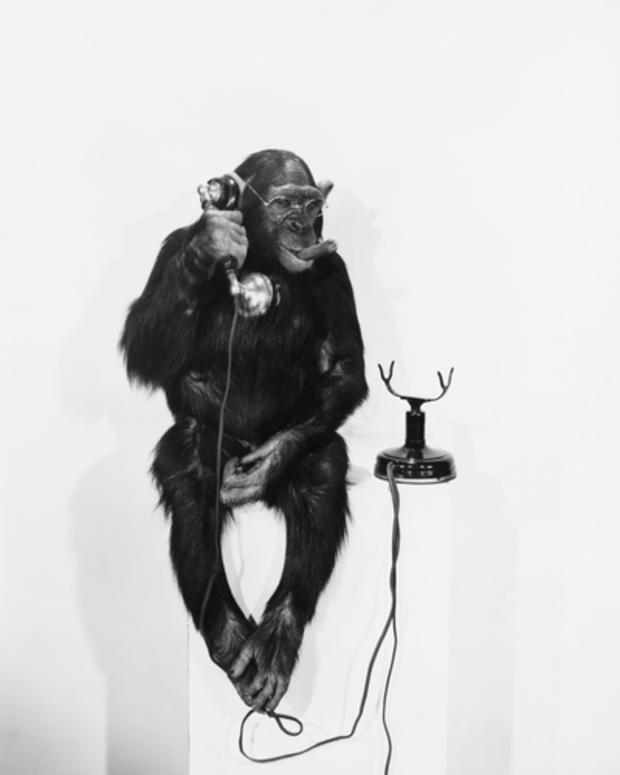 monkey_7711.jpg