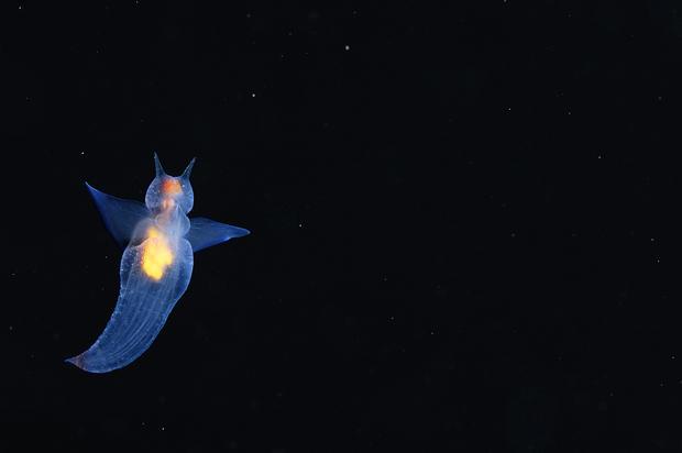 Amazing peek under the sea