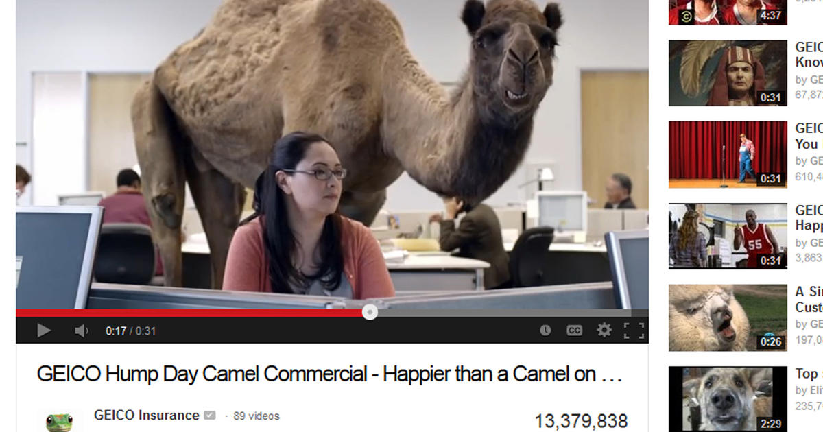 hump day camel video