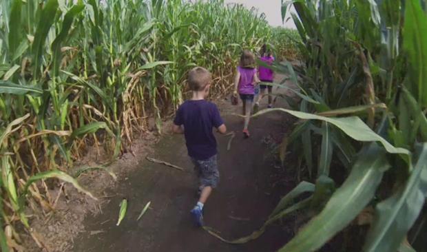 Maze_childrenofthecorn.jpg