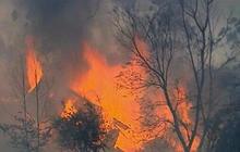 Australia wildfires: One dead, hundreds of homes destroyed near Sydney