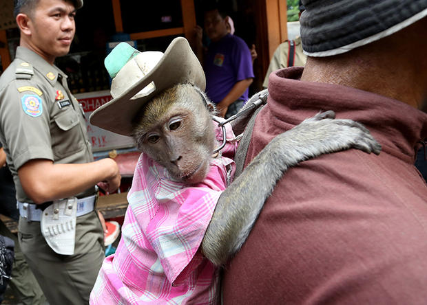 Cracking down on monkey business