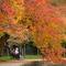 Fall_Colors_AP580320543248.jpg