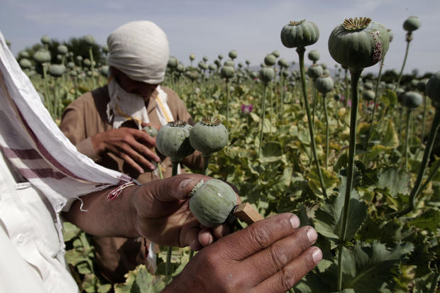 Opium production Afghanistan