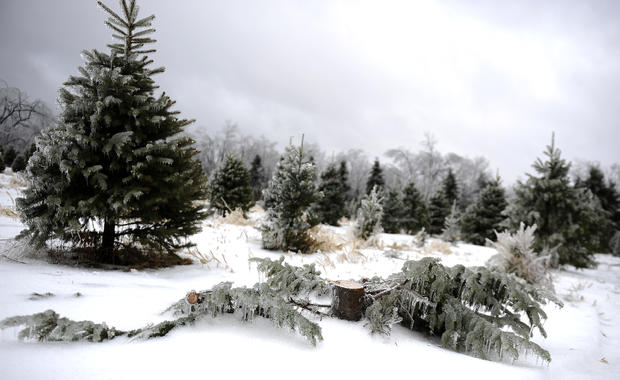 Christmas Weather: Ice Storm Leaves Many Without Power