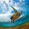 006_ocean_eagle_2100.jpg