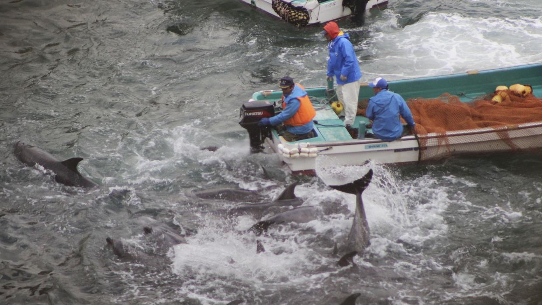 taiji whaling behind closed doors essay