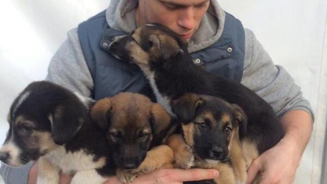 gus-puppies-bgn0fe8ieaa8jx-.jpg