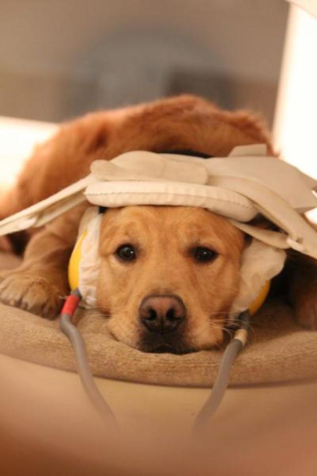 Dog getting scanned