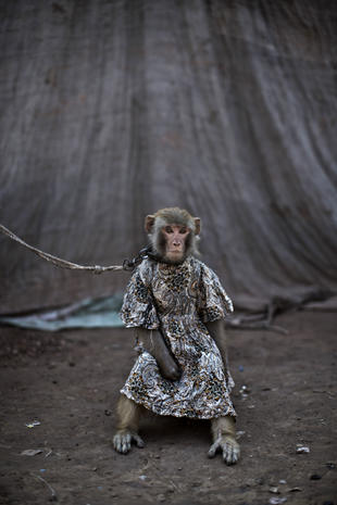 Pakistan's performing primates