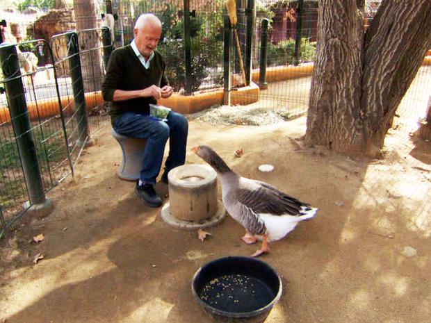 goose-zoo.jpg