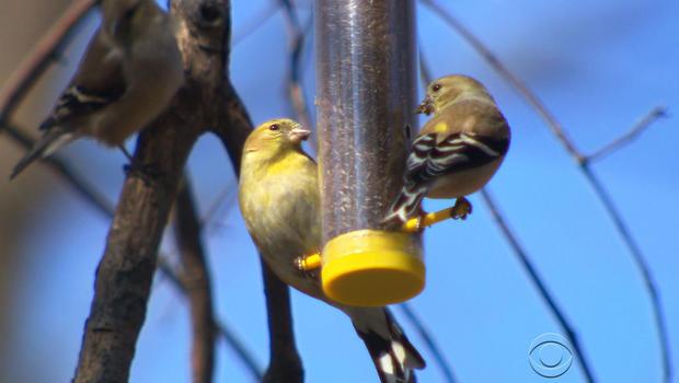 birdseat.jpg