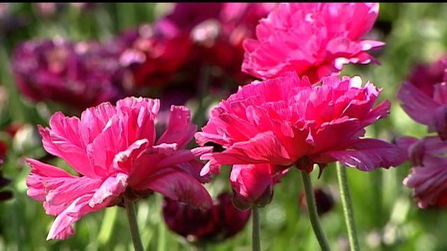 np-0320-flowers-640x360.jpg