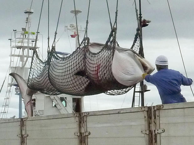japan-whaling-ap123757631927.jpg