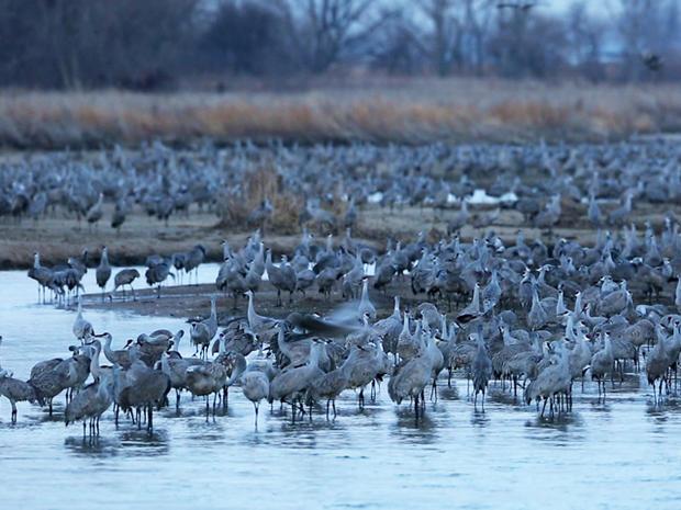 cranes-river.jpg