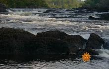 Nature: Penobscot River