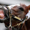 kentucky-derby-california-chrome-487630375.jpg