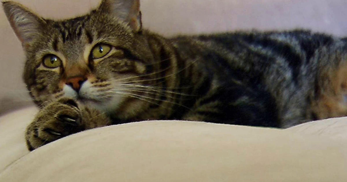 Hero Cat Saves Boy From Vicious Dog Attack