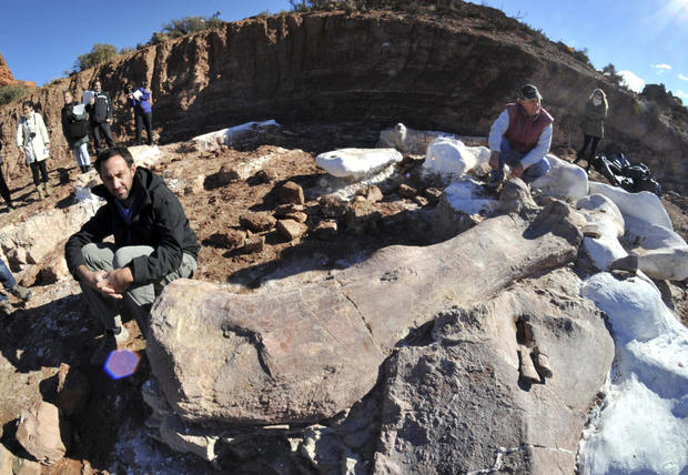 Largest ever set of dinosaur remains