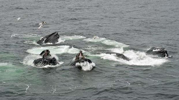 whalessplashing.jpg