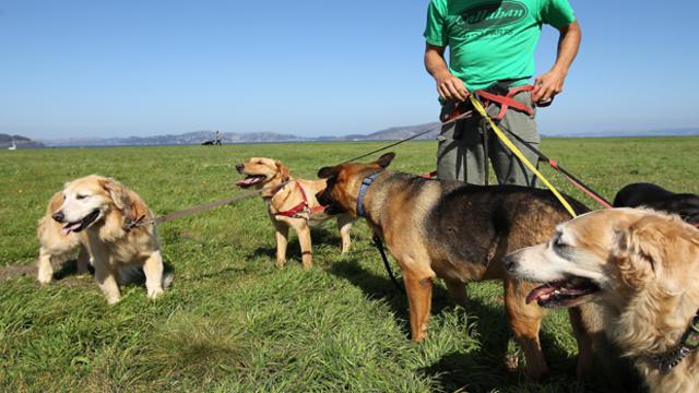 dog-walkers129672746620x350.jpg