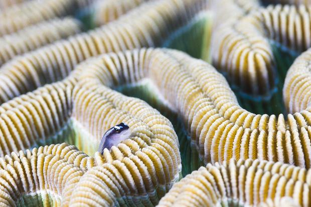 belize-barrier-reef-reserve-system-belize-glovers-reef-lynton-burger.jpg