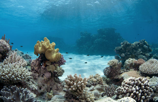 Underwater photos from UNESCO World Heritage Marine Sites