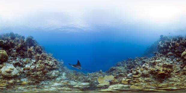 belize-barrier-reef-reserve-system-belize-glovers-reef.jpg