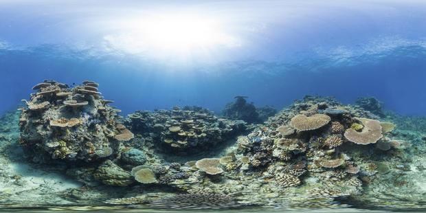 great-barrier-reef-australia-wilson-reef.jpg