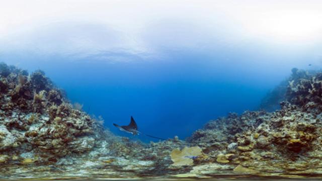 belize-barrier-reef-reserve-system-belize-glovers-reef633x350cropped.jpg