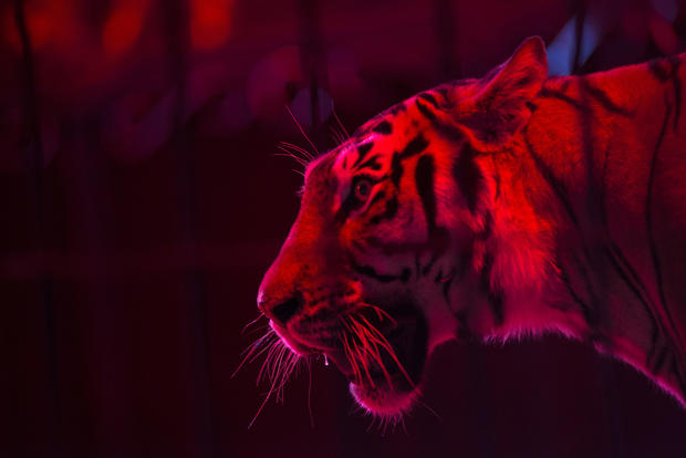 End of an era for Mexican circuses