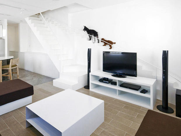 5 customized homes that provide luxury living for pets