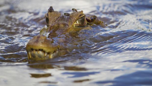 Animals of the Peruvian Amazon