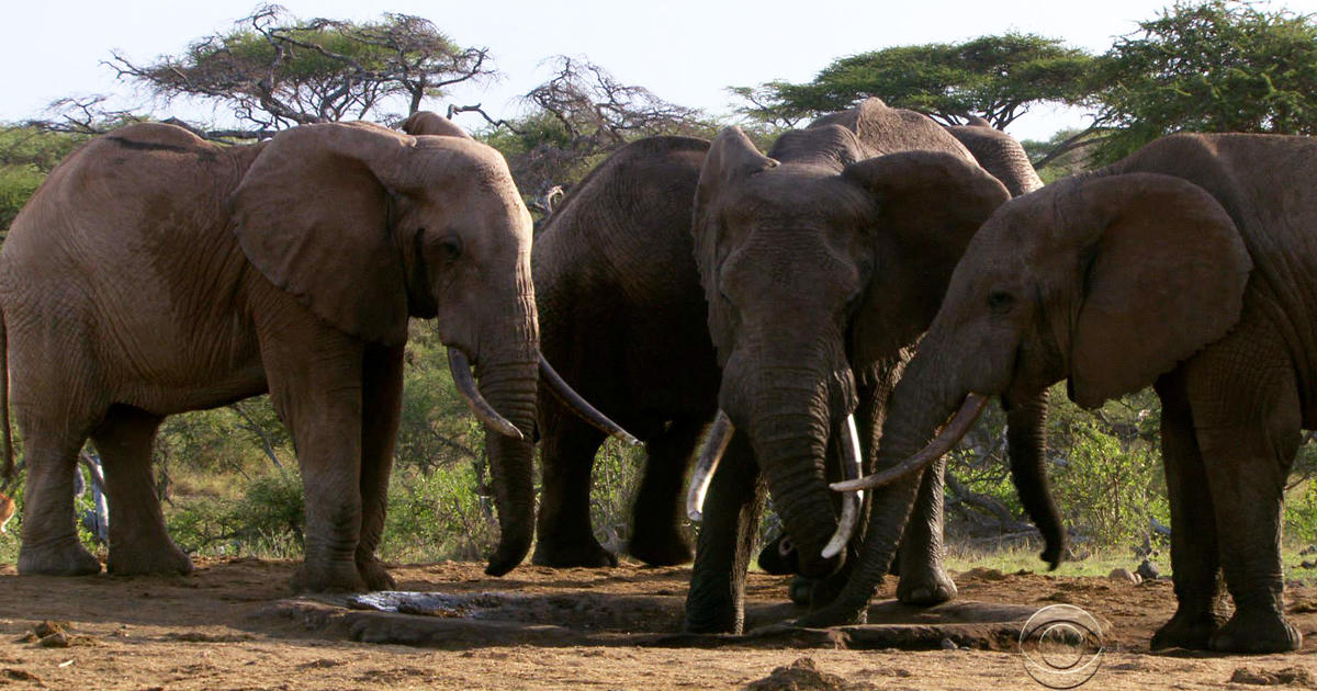 the killing of elephants