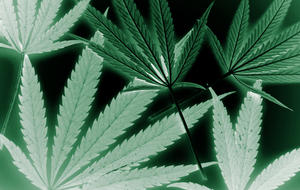 marijuana-nationphotodune-2902620-marijuana-l.jpg