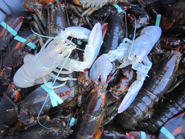 lobster2-1.jpg