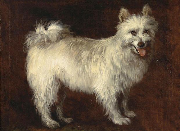 spitz-dog-1765-thomas-gainsborough.jpg