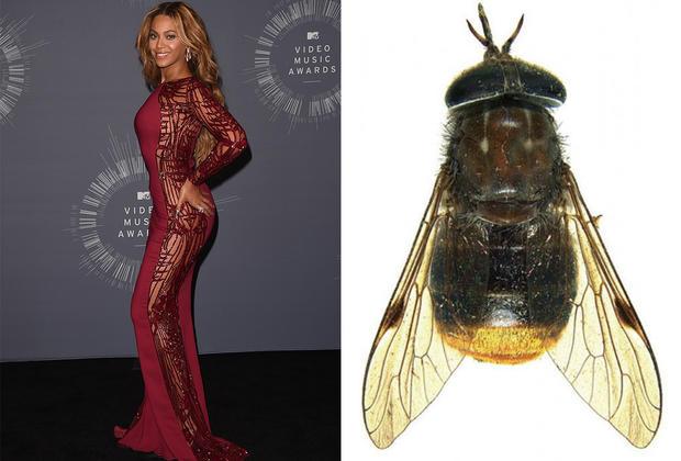 Celebrity species