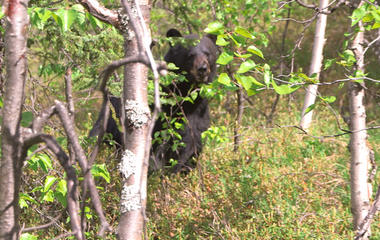 What's it like to come face-to-face with a bear?