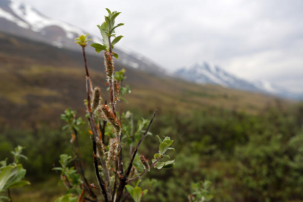 The beauty of the Yukon