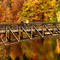 fall-colors-457778272.jpg