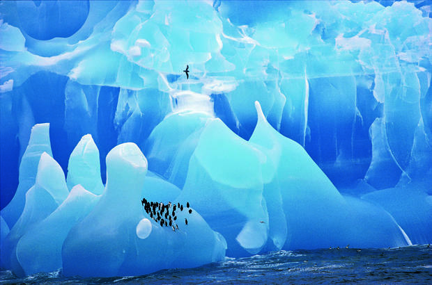 """""""Blue ice and penguins"""""""