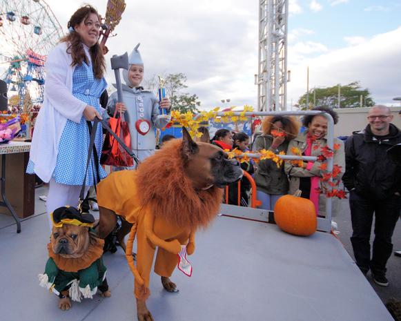 Halloween 2014: Dogs on parade
