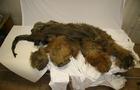 woolly-mammoth-yuka.jpg