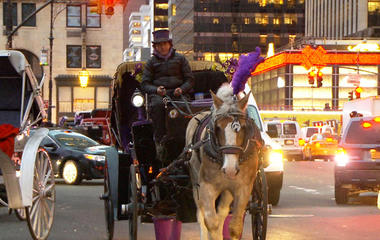 NYC Mayor pushes to ban horse-drawn carriages